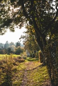 Footpath Tree Views